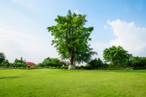 Residential na plots amenities- lawn